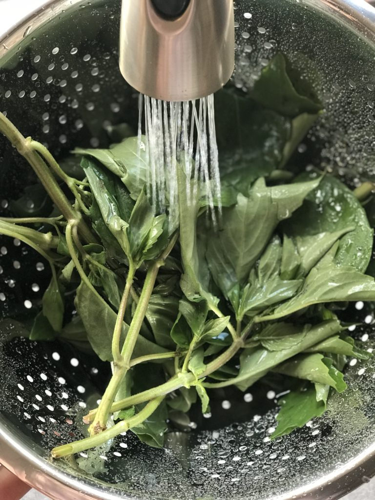 Basil leaves in a colander being rinsed with water
